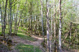 forêt méditative