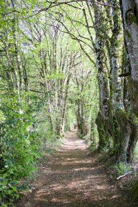 marche méditative dans la forêt