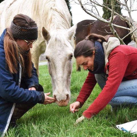 stage gestion prairie chevaux