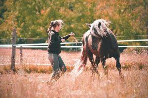 Yoga du Cheval & du Cavalier